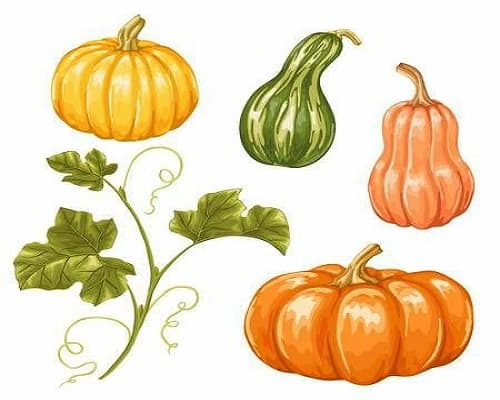 Futuro Organic Gourds