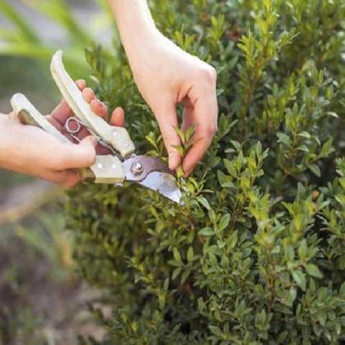 Plant Purning