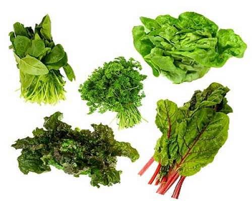 Futuro Organic Greens