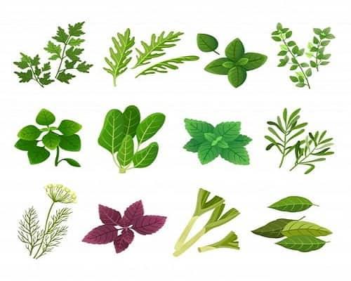 Futuro Organic Herbs