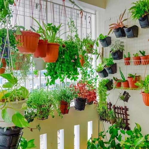 Balcony Gardening - Selecting Container
