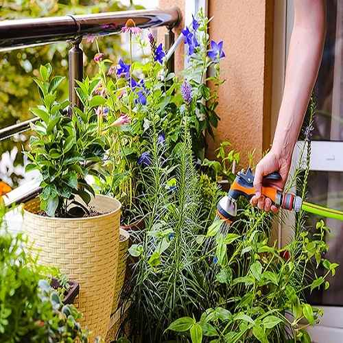 Plant Watering